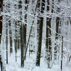 Wintery Day © KETMALA'S KITCHEN 2012-13