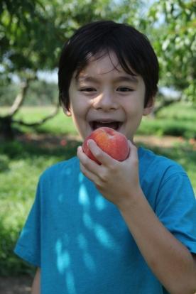 Juicy Peach © KETMALA'S KITCHEN 2012-13