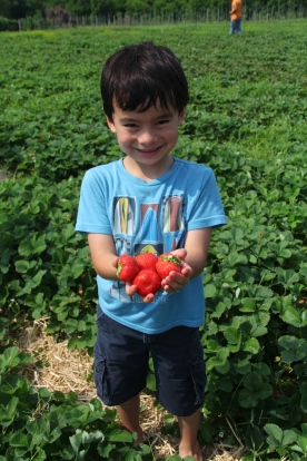 Strawberry Picking © KETMALA'S KITCHEN 2012-13