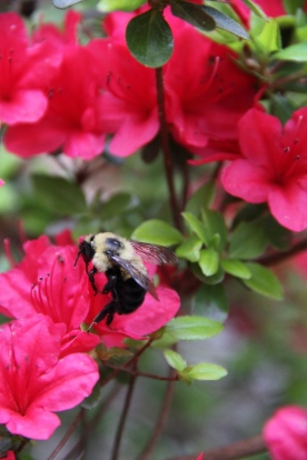 Bee Wine Berry Picking © KETMALA'S KITCHEN 2012-13