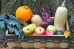 Fall Bounty © KETMALA'S KITCHEN 2012-13