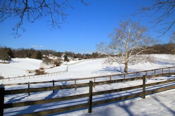 Winter Wonderland © KETMALA'S KITCHEN 2012-13