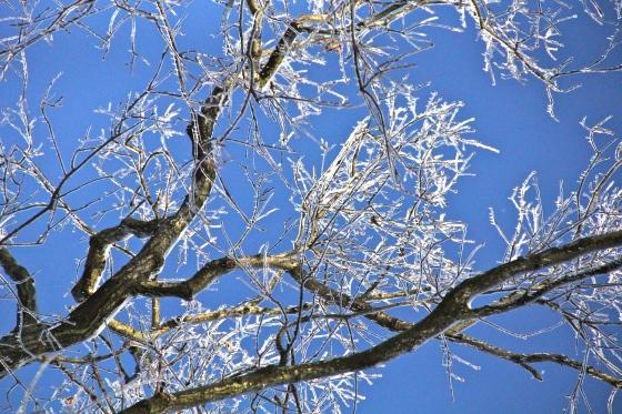 Icy Tree © KETMALA'S KITCHEN 2012-13